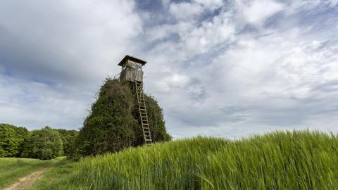 Hochsitz im Schwäbisch-fränkischen Wald Footage