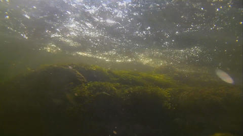 powerful underwater stream with bubbles and seawee Footage