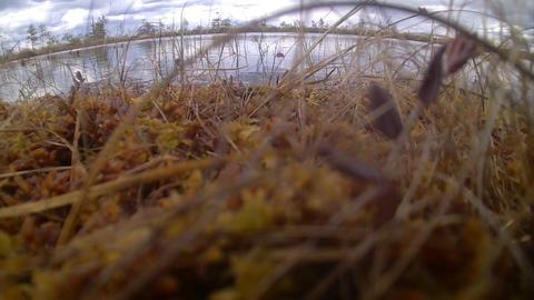 lake window on high moor Footage