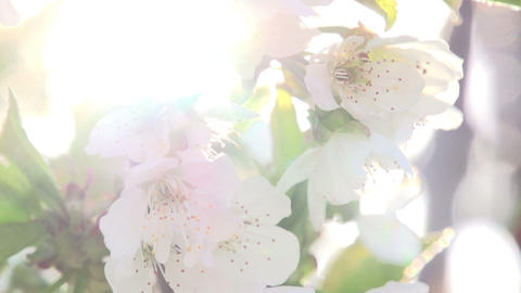Sunny Flowers Footage