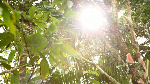 Forest canopy sun-flair Live Action