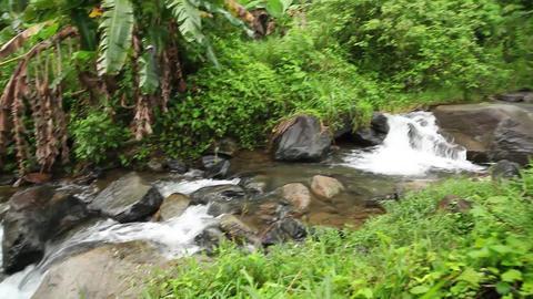 Lush Jungle stream pan Footage