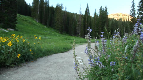 Mountain trail and flowers Footage