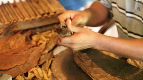 Cigar making Footage
