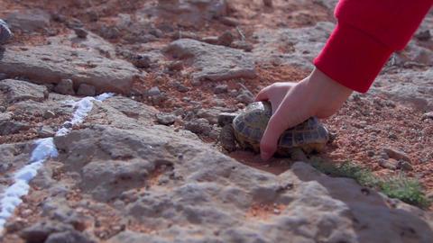 Turtle grab slow motion Footage