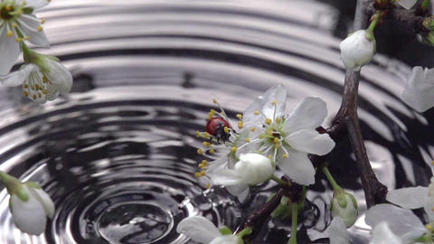 Flowering Branch Above Water stock footage