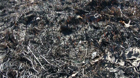 Burned grass, ash coals Live Action