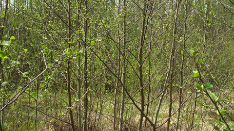 Green vegetation Footage