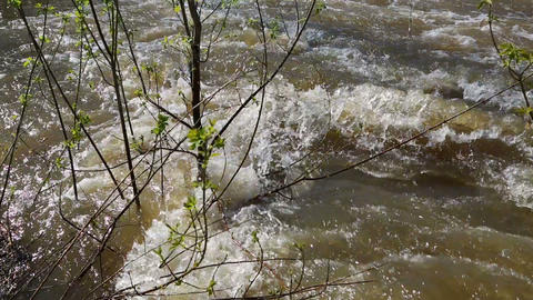 spring flood - water flooded forest Footage