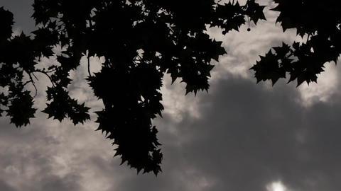 Gloomy Spooky Dark Sky With Trees 4 Footage