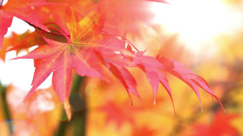 Autumn Colors stock footage