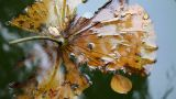 Leaf In The Water stock footage