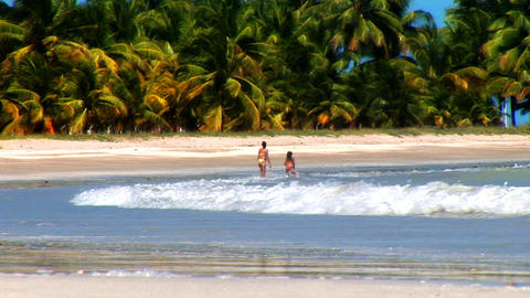 Wide of Tropical Beach Stock Video Footage