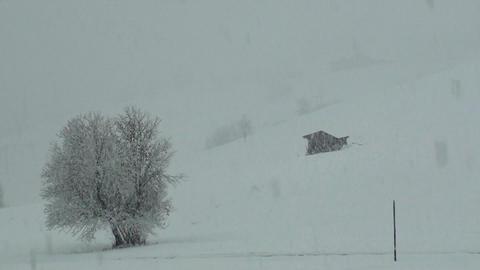 Snow falling Footage