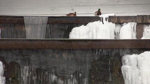 1588 Duck Down WaterFall HD J96 Stock Video Footage