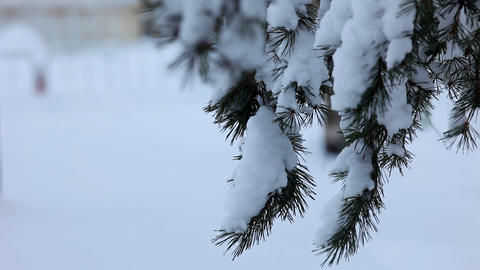 conifer branch under snow close up Stock Video Footage
