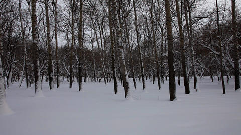 Vertical panorama at winter park Stock Video Footage