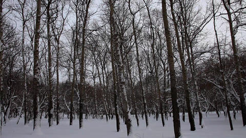Vertical panorama at winter park Footage