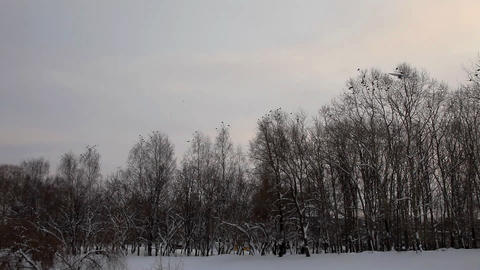 pan on trees with bird in winter par Stock Video Footage