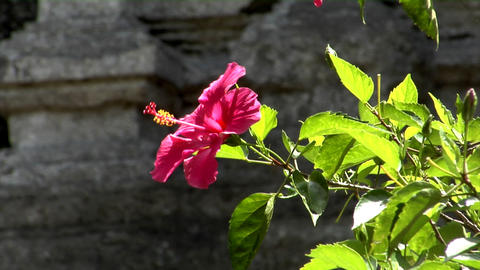 red flower Stock Video Footage