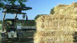 Farmer Loading Hay stock footage