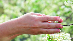 Hands gently caresses spring flowers Footage