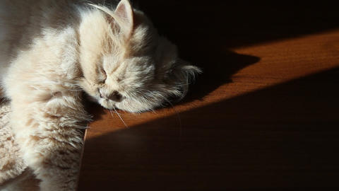 Cat relaxing with sunbeam Footage