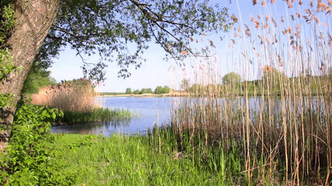 Summer Riverbank Footage