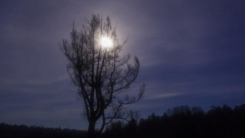 Naked larch on moon background. Time Lapse. 1280x7 Footage