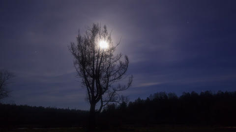 For larch comes moon. Time Lapse. 4K Footage