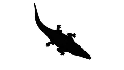 Crocodile open mouth attack hunting eating,Dangerous animals sketch silhouette Live Action