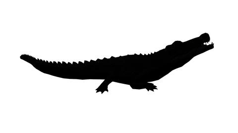 Crocodile open mouth attack hunting eating,Dangerous animals sketch silhouette Footage