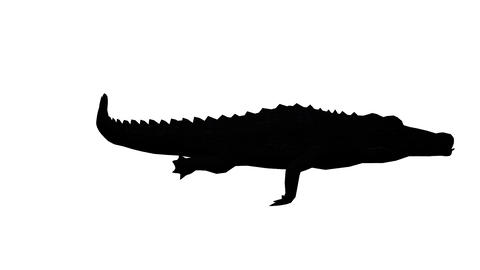 Crocodile swaying body swimming,Dangerous animals sketch silhouette Footage