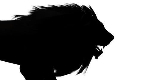 Lion walk,Endangered wild animal wildlife walking sketch silhouette Live Action