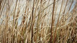 Long wild grass Footage