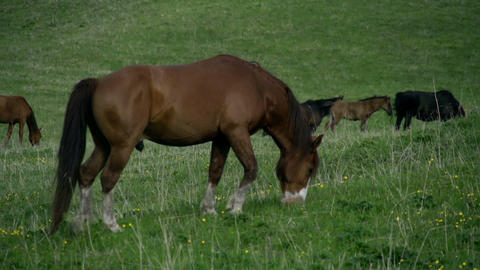 Horse on a Spring Pasture Footage