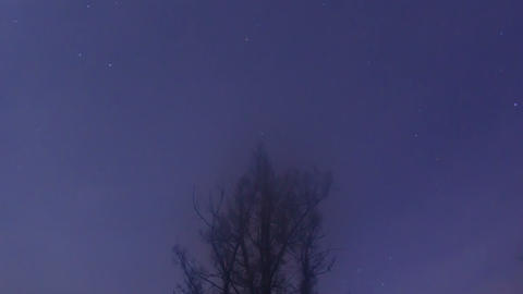 Stars around the larch. Time Lapse. 1280x720 Footage