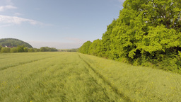 Field of rapeseed Footage