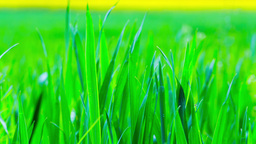 Green grass in the morning Footage