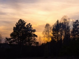 Sunset behind the trees. Time Lapse. 640x480 Footage