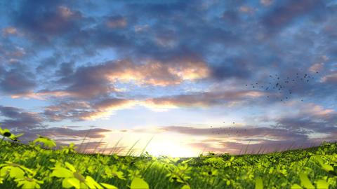 Birds Over Meadow Animation