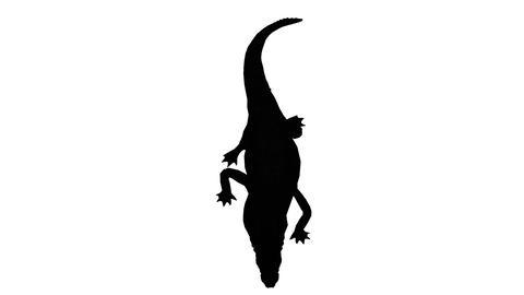 Crocodile swaying body climb crawling,Dangerous animals sketch silhouette Footage