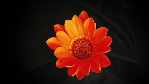 blossom flower 4k strange effect Footage
