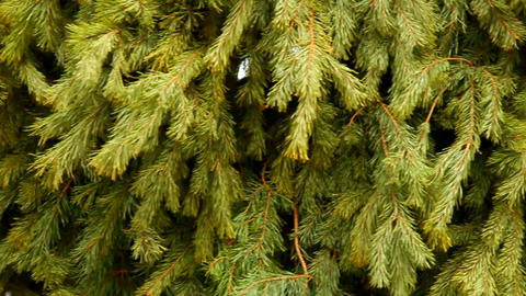 xmas tree background Footage