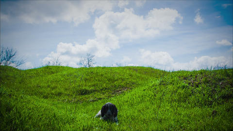Panting Dog Resting In The Field stock footage