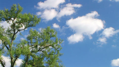 Tree with Clouds Time Lapse Stock Video Footage