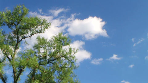 Tree with Clouds Time Lapse Footage