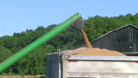 Combine Emptying Wheat 02 Footage