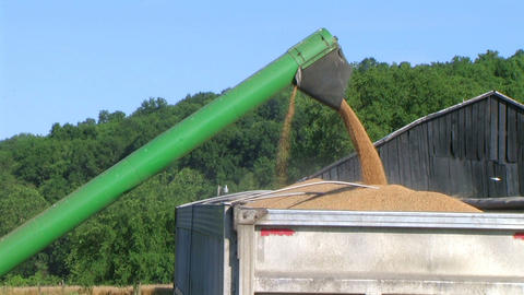 Combine Emptying Wheat 02 Stock Video Footage