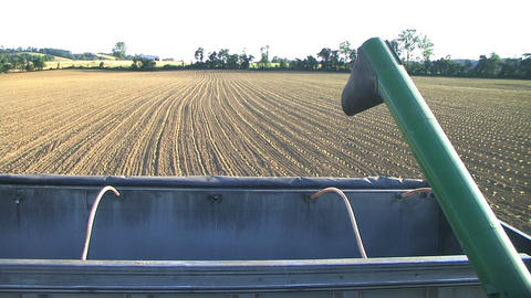 Combine Emptying Wheat Footage